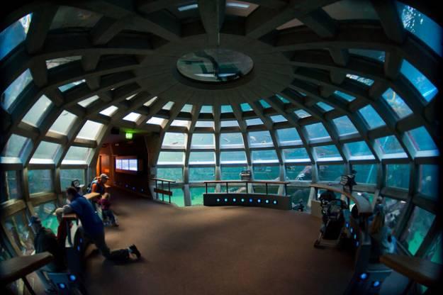 Washington aquarium location washington get free image for Aquarium washington dc